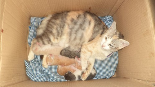 киса родила на 12.06.2014
