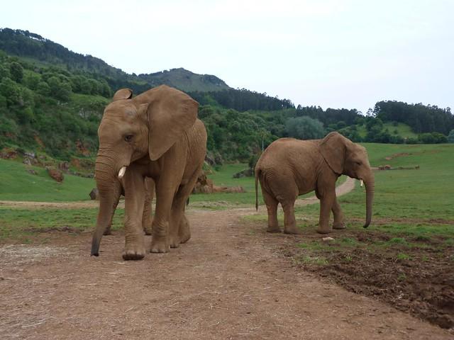 Elefantes de Cabárceno