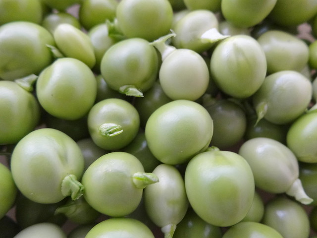 Peas: Kelvedon Wonder & Oregon Sugar Snap