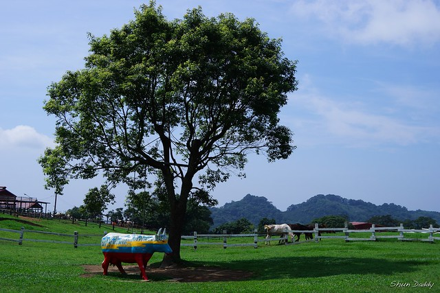 Tree and Ranch
