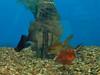 sarasota-fish-tanks-design-install-maintain-florida-3