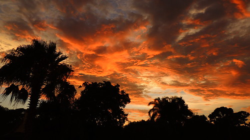 blue sunset red summer wallpaper orange sun storm color tree weather silhouette yellow clouds tampa landscape nikon flickr florida cloudy palm coolpix sarasota thunder bradenton gulfcoast p510 mullhaupt jimmullhaupt