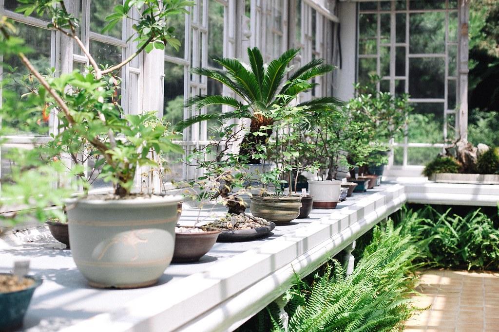 Seoul Greenhouse 006