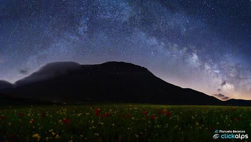 flowering under the stars