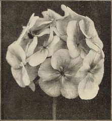 """Image from page 159 of """"Dreer's garden book 1915"""" (1915)"""