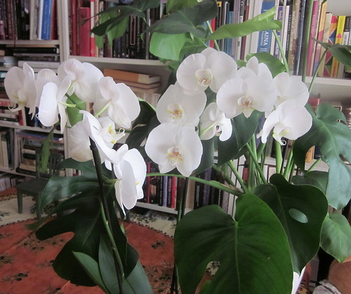My white orchid 2014 summer