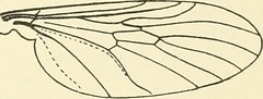 "Image from page 358 of ""American insects"" (1905)"