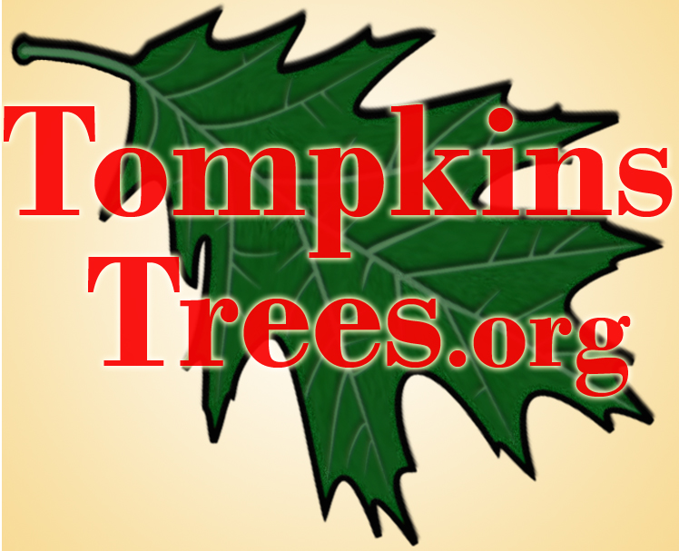 Tompkins Trees Logo