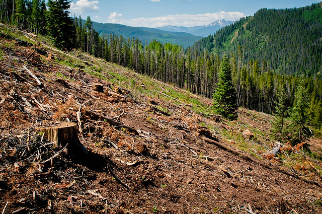 Clearcut in Spraddle Creek & Logging Operation
