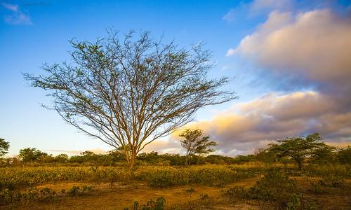 tree landscape paisagem árvore rqserra