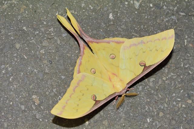 巴陵道路夜間昆蟲採集