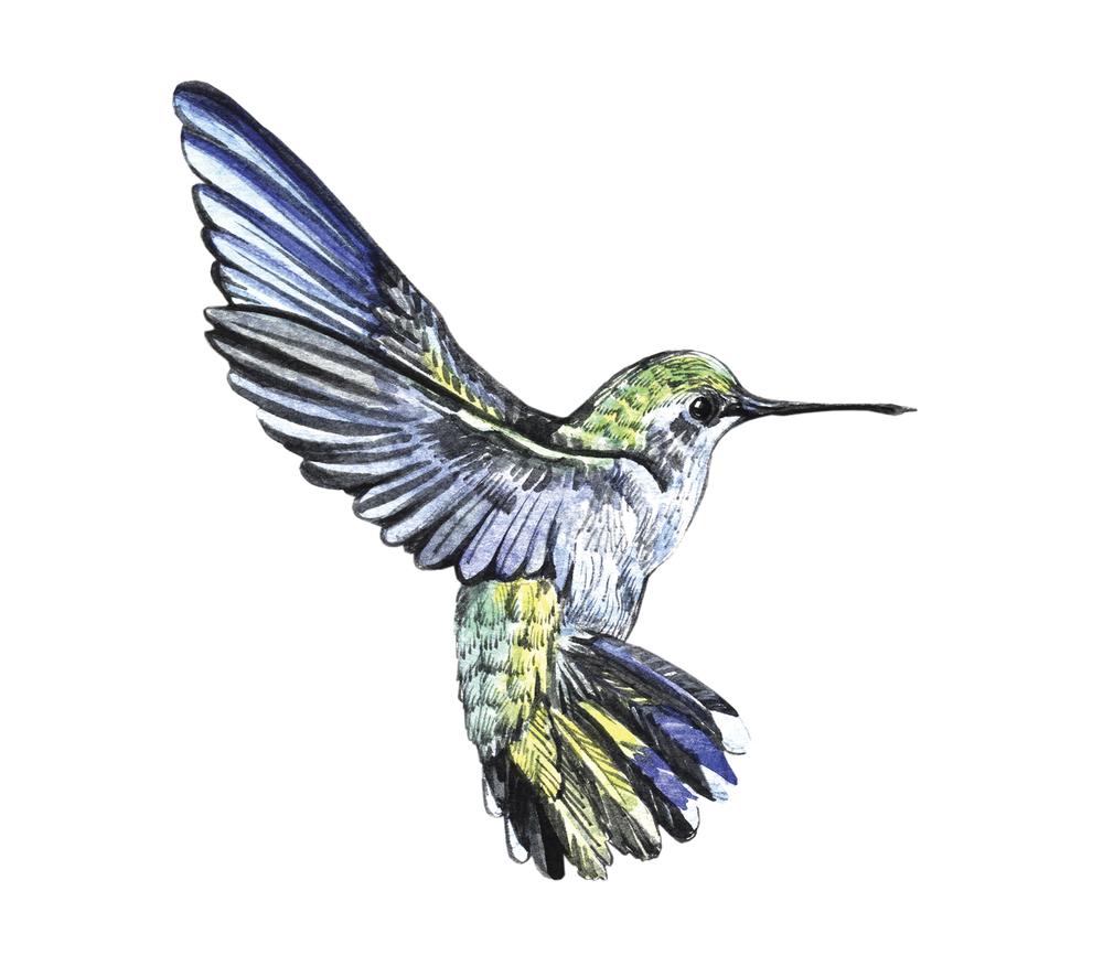 google humming bird update seo