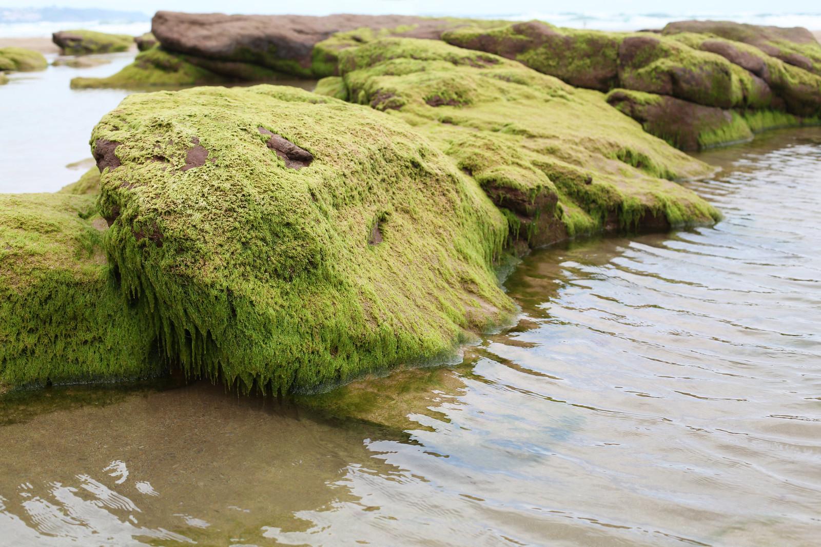 Manlul_beach_moss_