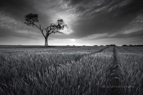 bw tractor tree field barley night sunrise mono bangor trail northernireland darkclouds countydown rihanna