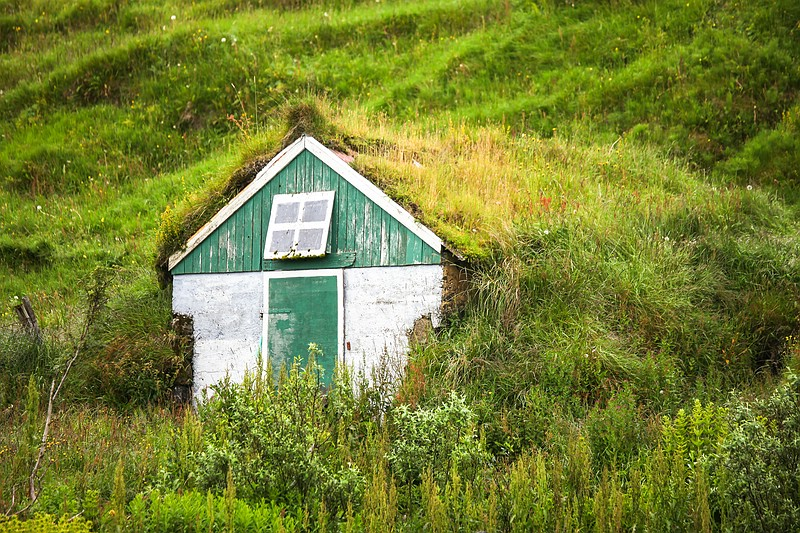House covered in grass