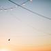 Sky Alight by jasfitz | letsfrolictogether.com