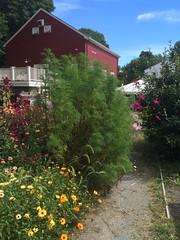 Angino Farm, CSA