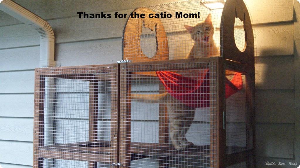 The Catio