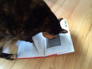 Lulu reads for International Literacy Day!
