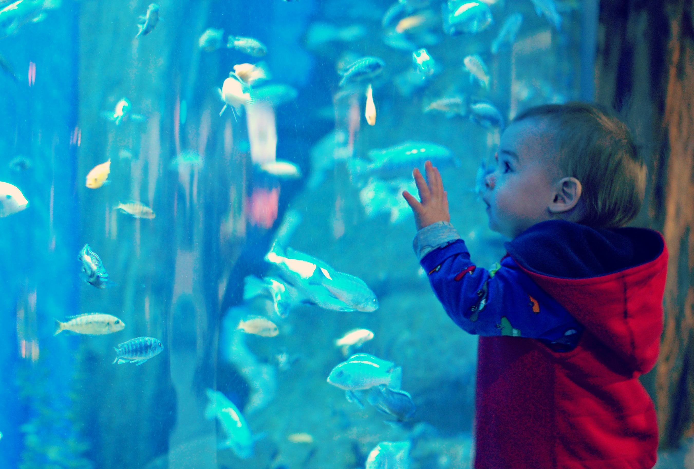 Baby John finding Nemo.