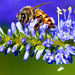 Bee Color Bee by Danny Perez Photography