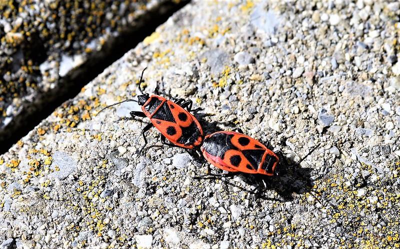 Fire Bugs 15.03 (7)