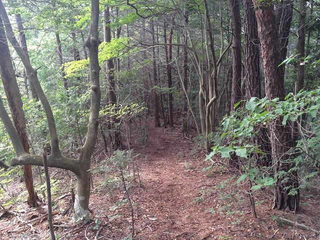 城ヶ峰〜石谷縦走路