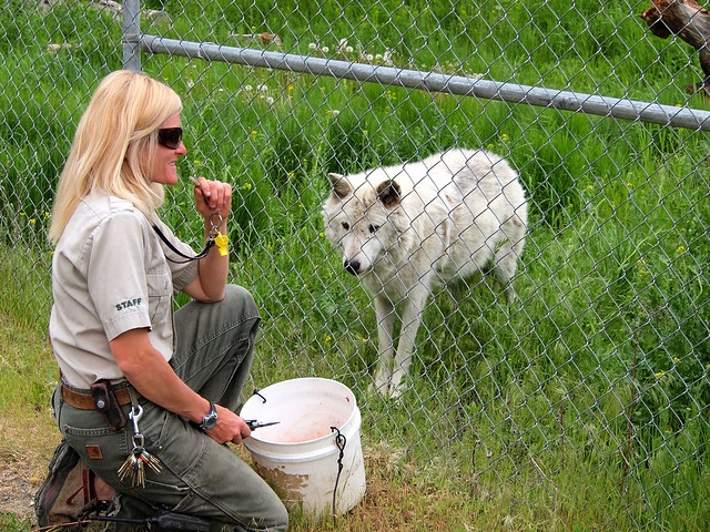 Feeding wolves at BC Wildlife Park in Kamloops