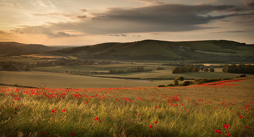 park england downs landscape sussex south farming east mount national poppy poppies downland cabburn