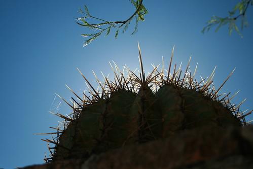 mexico mexique hacienda mexiko espinas messico 墨西哥 throns sanluispotosí épines メキシコ mekishiko mexquitic valleumbroso