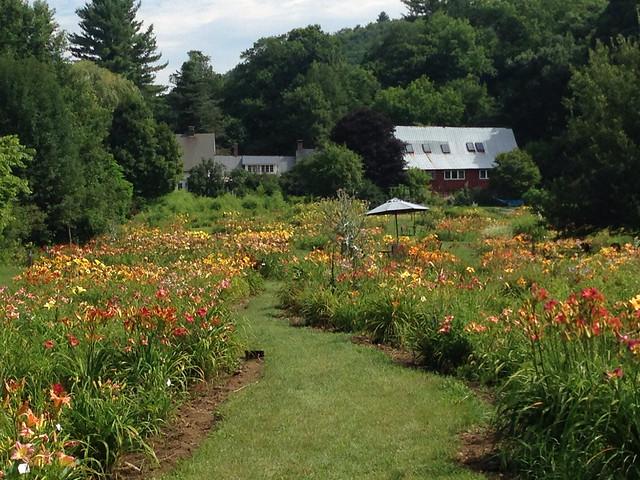 Olallie Daylily Gardens