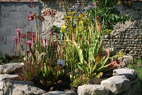 plantes2014 094