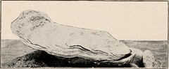 """Image from page 206 of """"Introduction to zoology; a guide to the study of animals, for the use of secondary schools;"""" (1900)"""