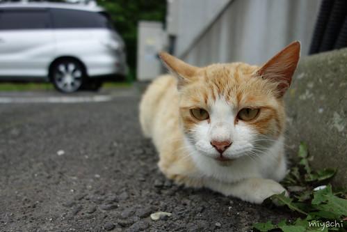 【101日目】やる気が無いとため息が出る。猫記事(北海道)