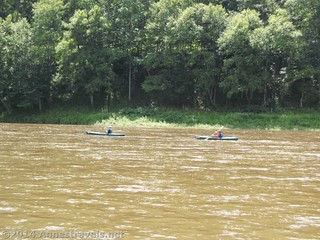 Rangers patrolling the river; they especially seem to frequent the rapids, Upper Delaware River National Recreation Area, New York