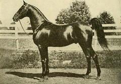"""Image from page 377 of """"Types and market classes of live stock"""" (1916)"""