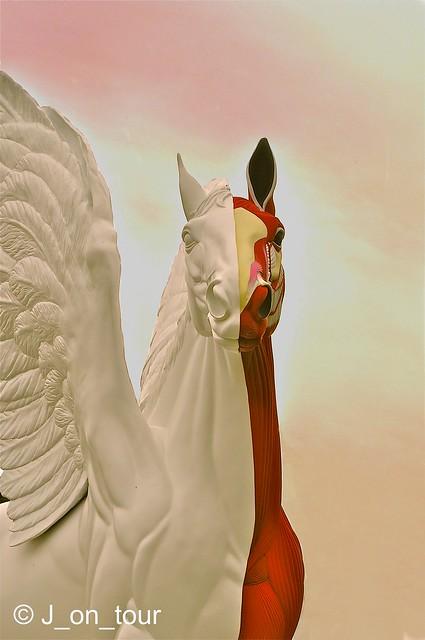 Dual Pegasus ... GJC_003928