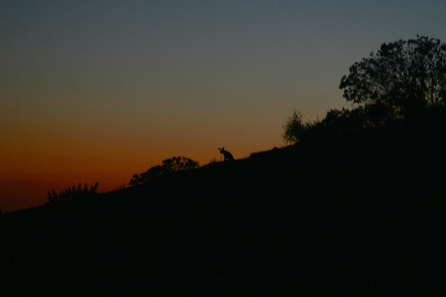 me and the coyote, watching the same sunset