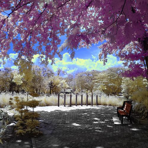 trees lake bench landscape ir filter infrared nationalzoo zoonegara inframerah