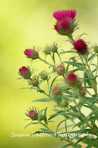 wpink_flower_2