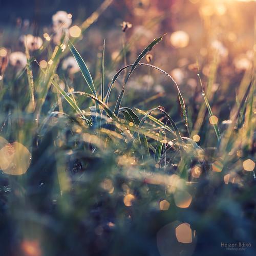 morning light sunset summer nature water field grass glow dew flover