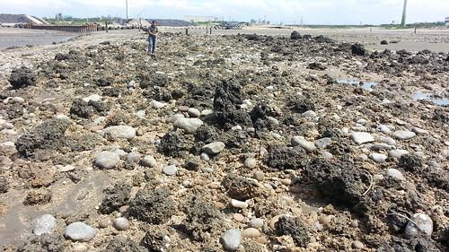 被挖出來的礁體。(圖:桃園在地聯盟)
