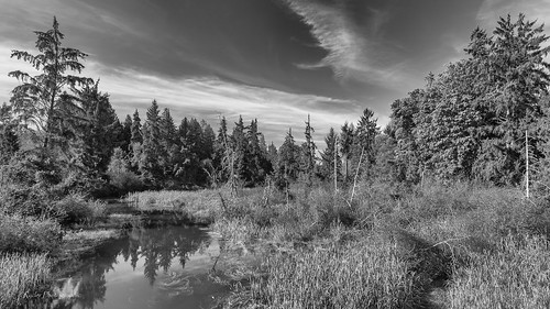 bw landscape nikon pacificnorthwest pugetsound washingtonstate tulalip d610 tonemapped quilcedacreek tidewaters nikon1635mmf4vr ryderphotographic howardryder