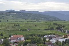 Austria veiniaiad