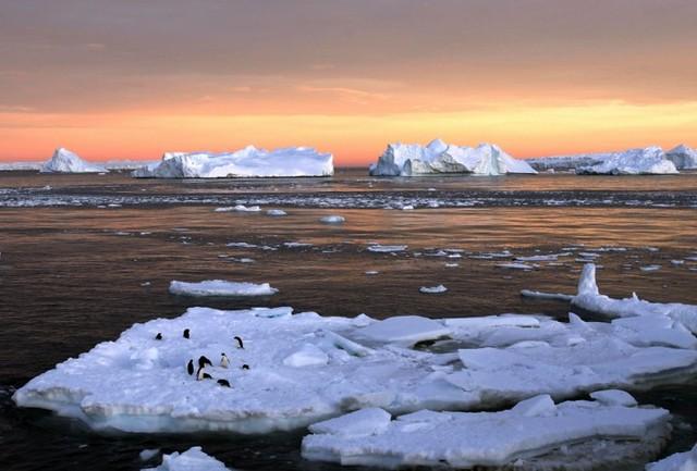 antarctica-diarioecologia
