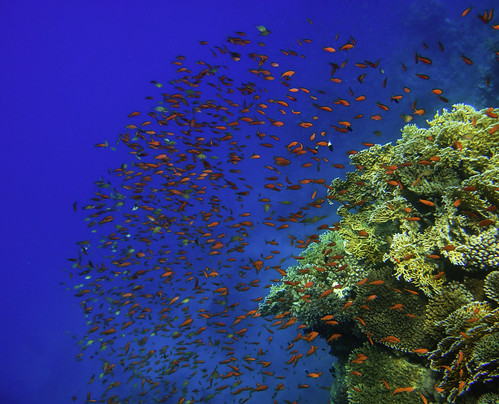Sharm El-Sheikh diving scuba
