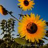 Trackside Flowers 20140906 -02