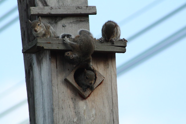 Baby Squirrels!