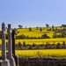 Small photo of St Clements cemetery near Galong, NSW