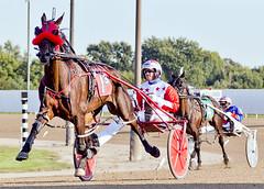 animal sports, racing, equestrian sport, sports, race, horse, horse harness, race track, harness racing,